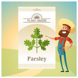 Pack of Parsley seeds icon Royalty Free Stock Images