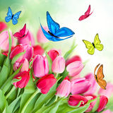 Pack of pink tulips with butterflies Royalty Free Stock Images