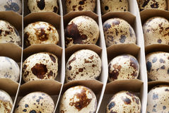 Pack of quail eggs Royalty Free Stock Photos