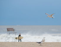 Pack of seagulls on the beach Stock Image