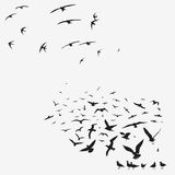 Pack of seagulls and swallows Stock Images