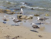 Seagulls during summer stock photography