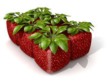 Pack of six cubic strawberries Royalty Free Stock Photography
