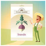 Pack of Swede seeds Stock Photography