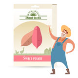 Pack of Sweet potato seeds Royalty Free Stock Photo