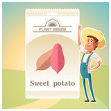 Pack of Sweet potato seeds Royalty Free Stock Photography