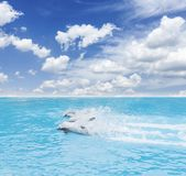 Pack of jumping dolphins royalty free stock photos