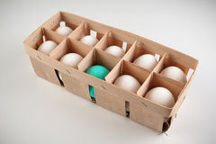 Pack of ten white eggs with one blue Stock Images
