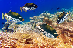 Pack of tropical fishes over a coral reef.Close up in a sunny day Stock Photography
