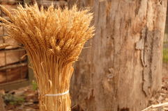 Pack of wheat 2 Royalty Free Stock Photo