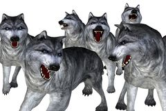 Pack of wolves. Illustration depicting a pack of grey wolves, isolated on white Stock Photo