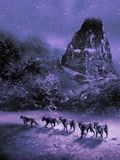 Pack of Wolves in the snow. Five wolves in a snowy landscape at the foreground of rocky mountains Stock Photo