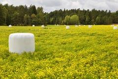 Packad ensilage på bygden grön liggandeyellow Royaltyfri Foto