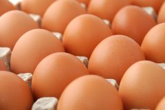 Package Of Chicken Eggs Royalty Free Stock Photography