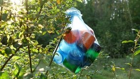 A package of plastic trash hanging in the woods on a tree branch, close-up, nature pollution by garbage, sunny stock video