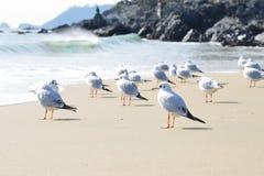 Package Tour - Seagull Beach Royalty Free Stock Photos