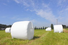 Packaged Hay Bails. Hay Bails are neatly bundled to use for winter feeding stock photos