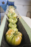 Packaging. Tomatoes arranged to be classified by their packaging machine before Stock Photos