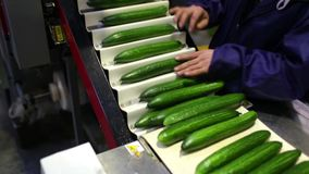 Packaging machine for cucumber at factory stock video footage