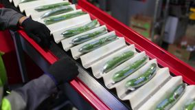 Packaging machine for cucumber at factory stock video