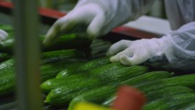 Packaging machine for cucumber at factory stock footage