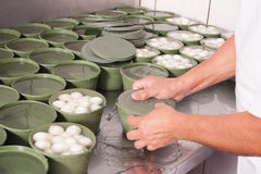 Packaging work. Workes hands at packaging freshly produced mozzarella cheese Royalty Free Stock Images