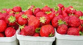 Packar med nya jordgubbar med gräsbakgrund Arkivbild