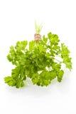 packe över parsleywhite Arkivfoton