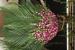 Packe av blomman Royaltyfri Fotografi