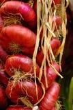 Packe av den röda löken Royaltyfri Fotografi