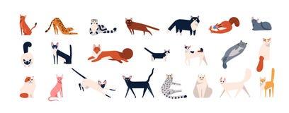 Packe av förtjusande katter av olika avel som sitter, ligga som går Ställ in av gulliga roliga husdjur eller tamdjur med stock illustrationer