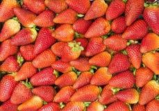 Packe av jordgubbar Arkivbilder