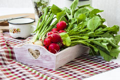 Packe av ljusa nya organiska rädisor med sidor Royaltyfria Foton