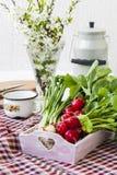 Packe av ljusa nya organiska rädisor med sidor Arkivfoto