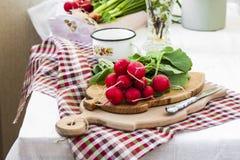 Packe av ljusa nya organiska rädisor med sidor Fotografering för Bildbyråer