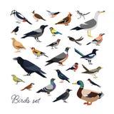 Packe av stad och lösa skogfåglar som dras i modern geometrisk plan stil, sidosikt Ställ in av färgrika tecknad filmavians eller vektor illustrationer