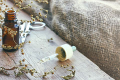 Packe av torkade örter absint, flaska av olja Royaltyfri Foto