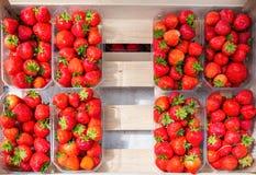 Packe för plast- ask av röda nya jordgubbar Fotografering för Bildbyråer