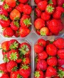 Packe för plast- ask av röda nya jordgubbar Royaltyfri Foto