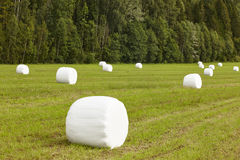 Packed fresh grass in the countryside. Norwegian landscape. Agri. Culture background. Horizontal Stock Photo