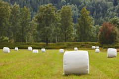 Packed fresh grass in the countryside. Norwegian landscape. Agri Stock Image