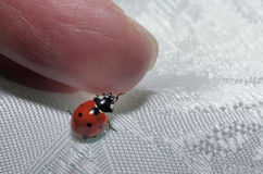 Packed from happiness. A ladybug packs a finger Royalty Free Stock Photos