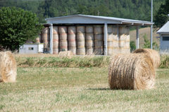 Packed hay bale harvested fodder balls ready Royalty Free Stock Image