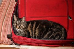 Packed and ready Royalty Free Stock Photo