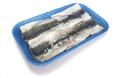 Packed tray of sardine filets from Northeast Atlantic, Spain Royalty Free Stock Image