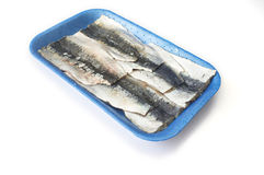 Packed tray of sardine filets from Northeast Atlantic, Spain Stock Image