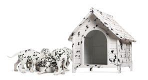 Packen av Dalmatian valpar som äter från samma, bowlar Royaltyfri Foto