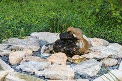 Packen Sie das Trinken von einem Brunnen mitten in einem Stapel von den Felsen weg, die draußen durch Grünpflanzen umgeben werden Lizenzfreies Stockbild