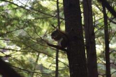 Packen Sie in einem Baum heraus sich verstecken weg lizenzfreie stockbilder