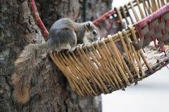 Packen Sie Suchvorgang für Lebensmittel in den Weidenkörben auf dem Baum weg lizenzfreies stockfoto